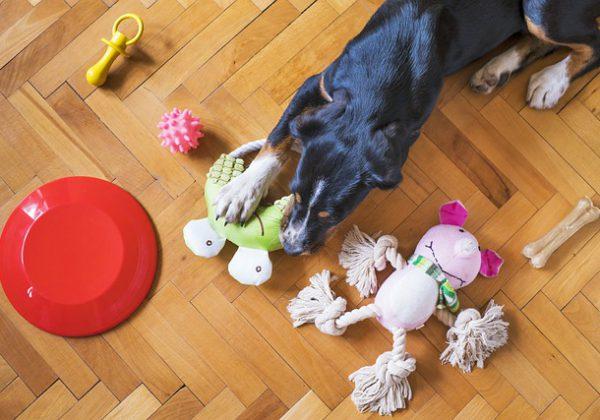 צעצועים לכלבים מדברים שיש בבית: עשו זאת בעצמכם