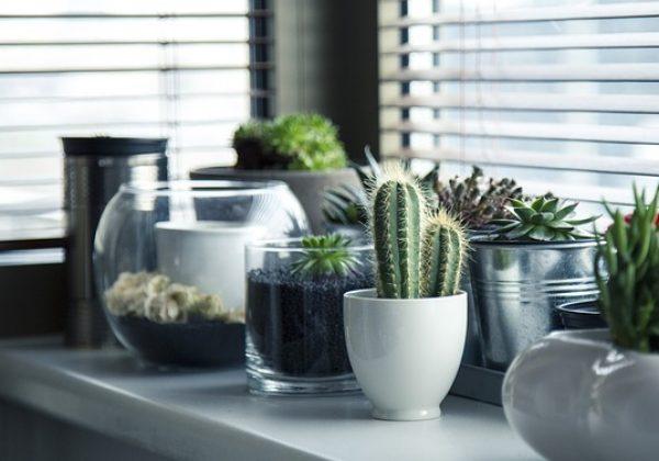 אלמנטים מיוחדים לעיצוב הבית